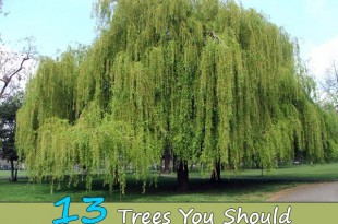 13 Trees You Should Never Plant In Your Yard