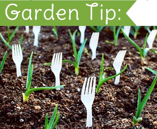 Clever Gardening Tips And Ideas - Home and Gardening Ideas