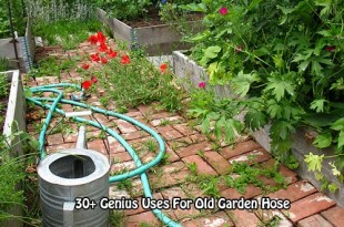 30+ Genius Uses For Old Garden Hose