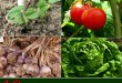 10 Most Cost Effective Vegetables To Grow