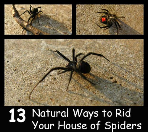13 natural ways to rid your house of spiders home and