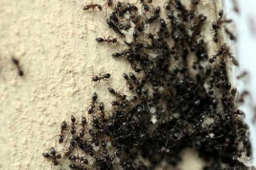 15 Ways to Keep Those Pesky Ants Out of Your Home And Garden