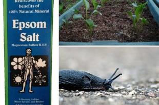 How to Use Epsom Salt in Your Garden