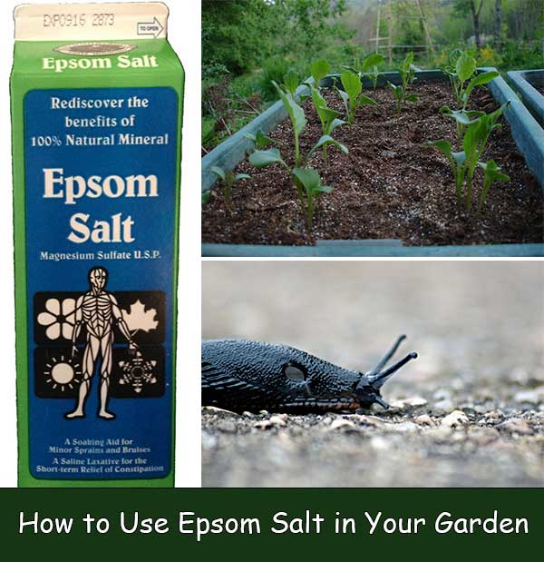 How to use epsom salt in your garden home and gardening ideas for How to use epsom salt in garden