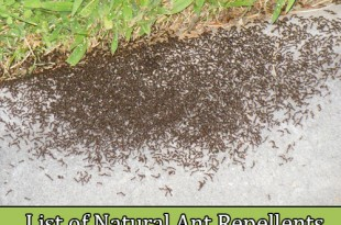 List of Natural Ant Repellents and Tips in 4 Simple Steps
