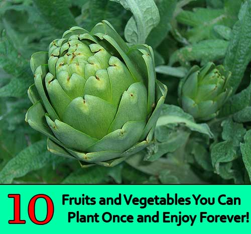 10 Fruits and Vegetables You Can Plant Once and Enjoy Forever!