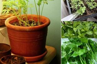16 Healthy and Edible Indoor Plants