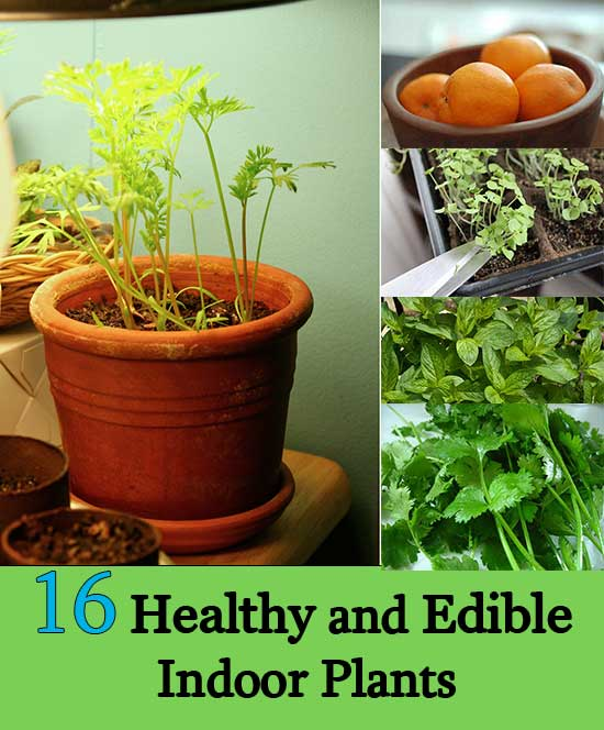 16 Healthy and Edible Indoor Plants