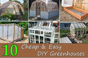 Top 10 Cheap & Easy DIY Greenhouses