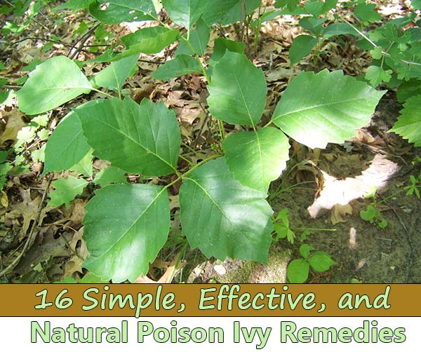 16 Simple, Effective, and Natural Poison Ivy Remedies