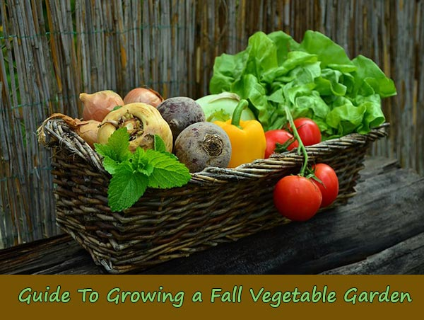 fall vegetable garden Absolutiontheplaycom