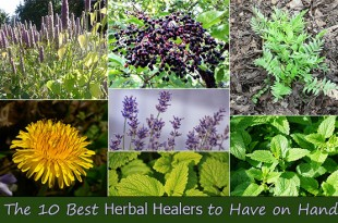 The 10 Best Herbal Healers to Have on Hand