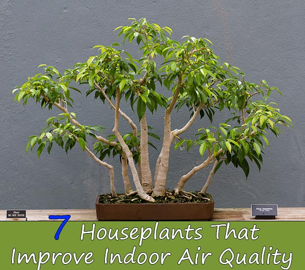 7 Houseplants That Improve Indoor Air Quality