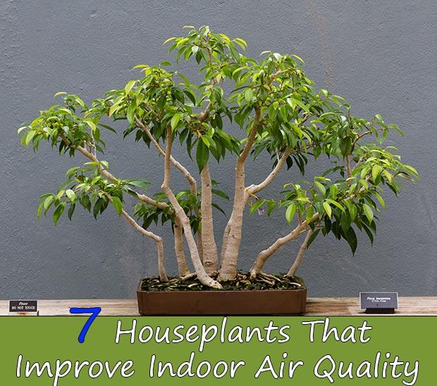 7 Houseplants That Improve Indoor Air Quality