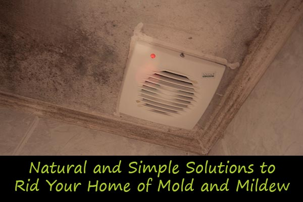 Natural And Simple Solutions To Rid Your Home Of Mold Mildew Gardening Ideas