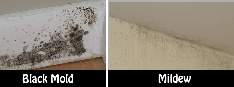 Natural And Simple Solutions To Rid Your Home Of Mold And