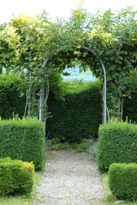 Perfect Best Shrubs For Privacy