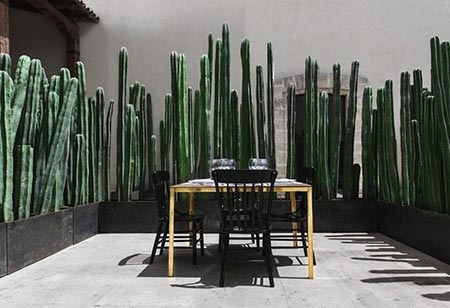 Cactus as Glamorous Privacy Fencing