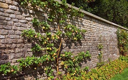 Grow a Fruit Tree edible wall