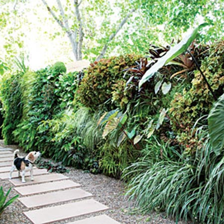 How to plant a lush living wall
