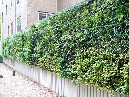 The Ultimate Guide To Living Green Walls -
