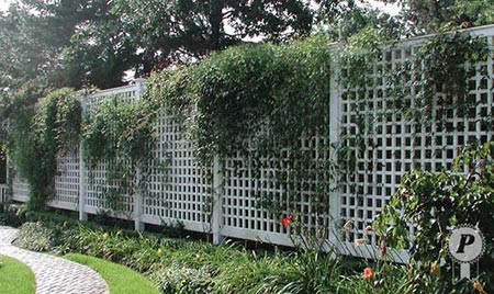 lattice privacy fence with vines