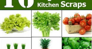 Re-Grow Yourself from Kitchen Scraps