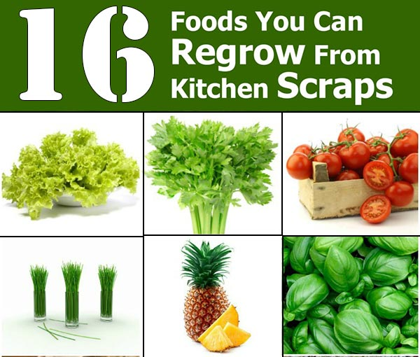 16 Foods You Can Re-Grow From Kitchen Scraps
