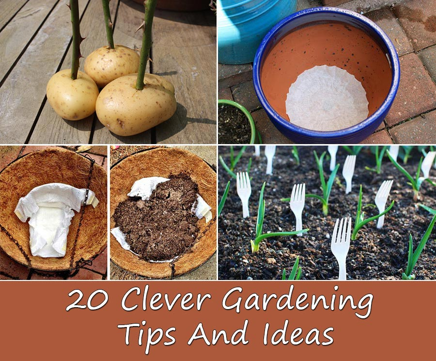 20 Clever Gardening Tips And Ideas