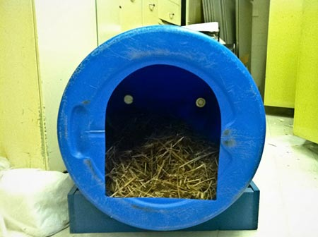 11 creative things to make with 55 gallon plastic barrels for Barrel dog house designs