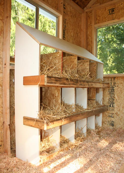Blue Coop Nesting Boxes