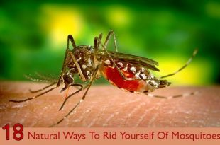 Natural-Ways-To-Rid-Yourself-Of-Mosquitoes