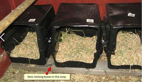 Plastic Chicken Nesting Box Plans