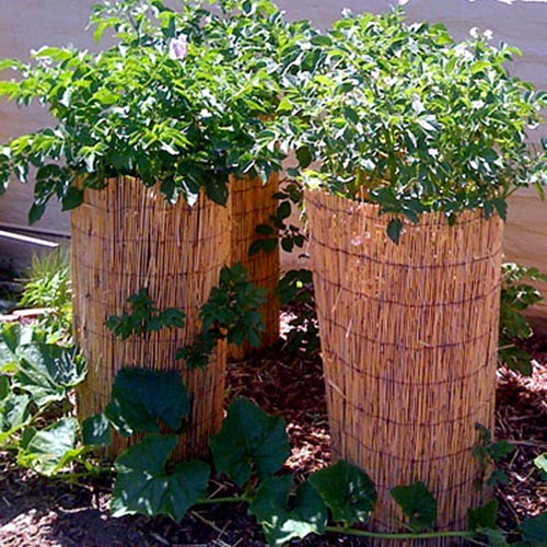 Potatoes Towers