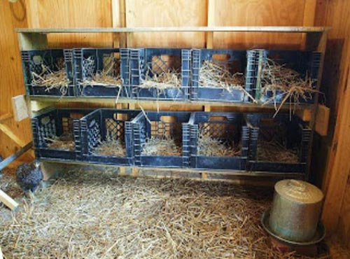 Repurposing Milk Crates as Economical Nesting Boxes
