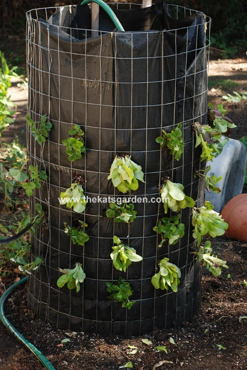 20 garden plants to grow vertically this year for How to cut lettuce from garden