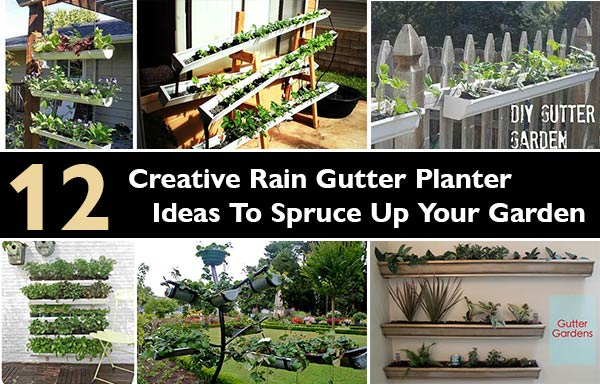 Creative Rain Gutter Planter Ideas To Spruce Up Your Garden