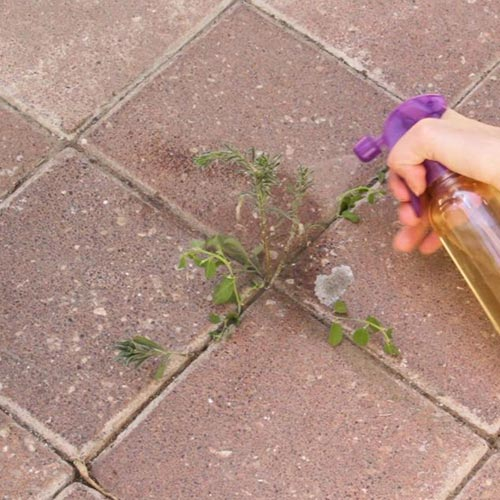 Natural Way To Kill Grass Between Pavers
