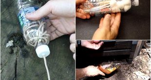 16 Plastic Bottle Hacks for Survival