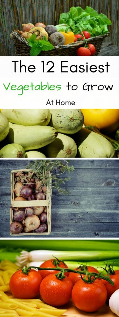 12 Easiest Vegetables to Grow at home