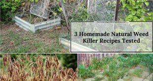3 Homemade Natural Weed Killer Recipes Tested