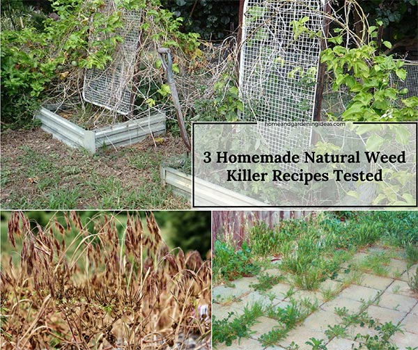 3 Homemade Natural Weed Killer Recipes Tested