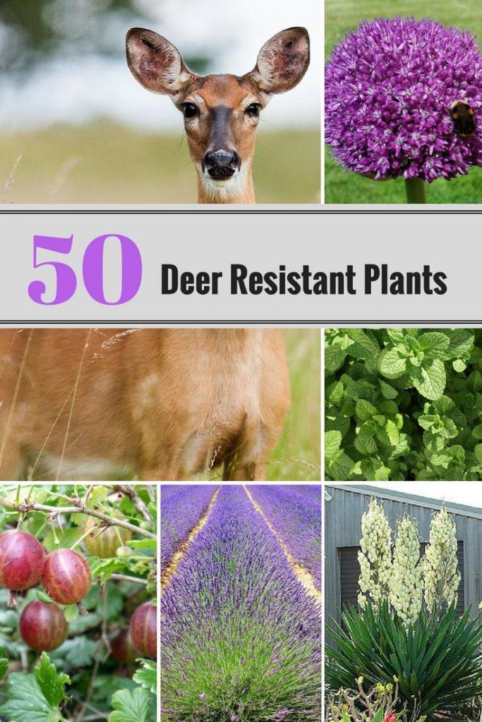 50 Deer Resistant Plants