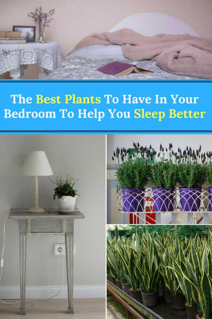 The Best Plants To Have In Your Bedroom To Help You Sleep Better