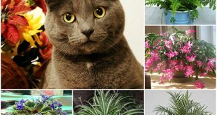 Cat Safe Plants For Your Home