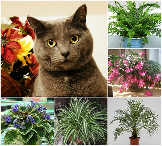 14 cat safe plants for your home home and gardening ideas for Areca palm safe for cats