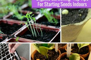 Guide To Starting Seeds Indoors
