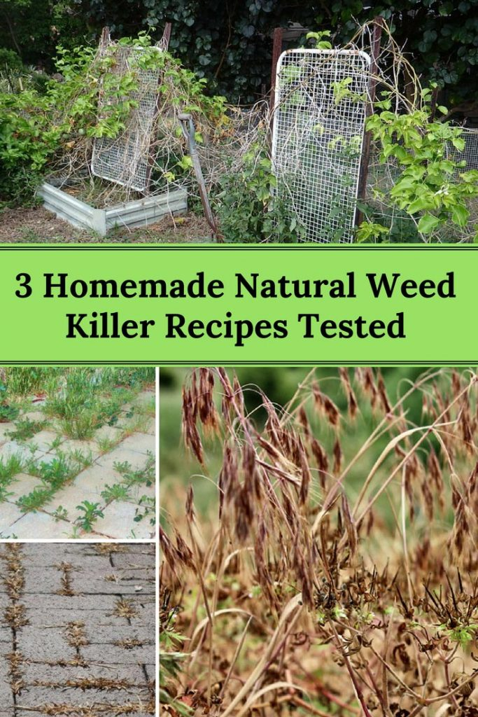 Homemade Natural Weed Killer Recipes Tested