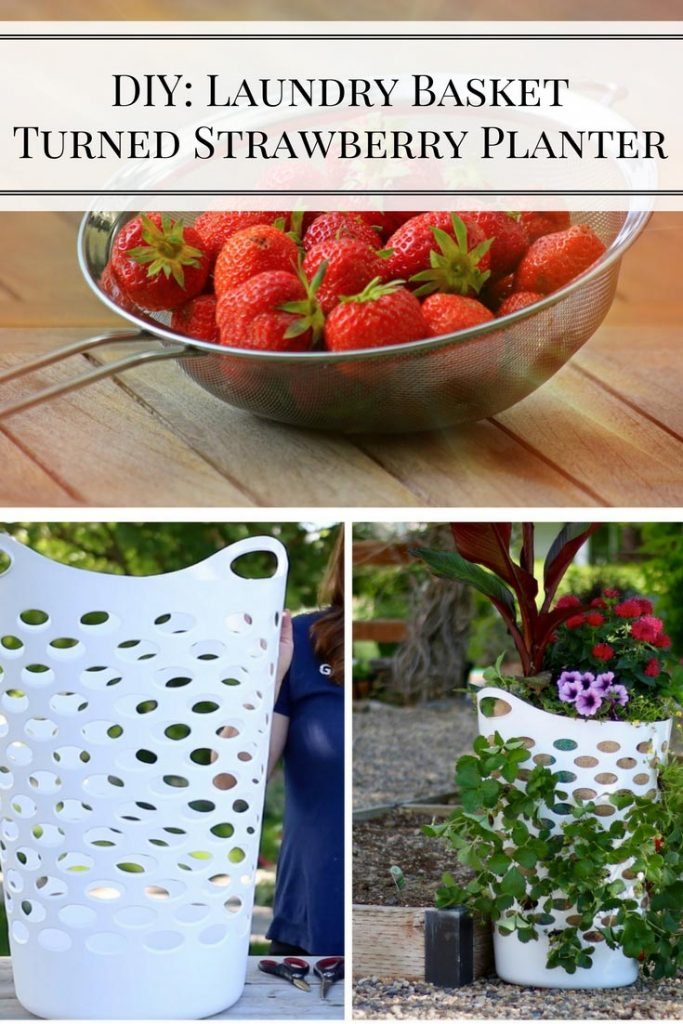 DIY: Laundry Basket Turned Strawberry Planter