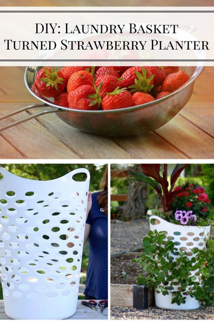 DIY: Laundry Basket Turned Strawberry Planter